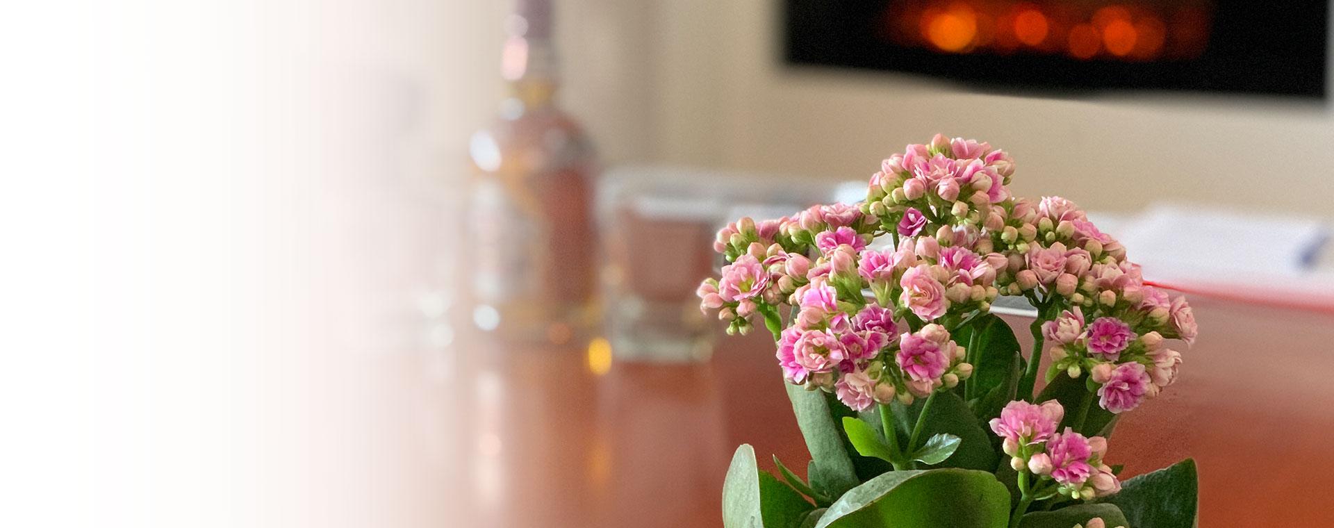 Madame Cvećara   Sve vrste sobnog cveća